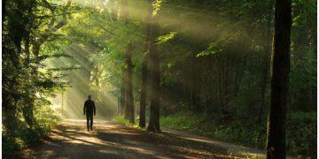 Shinrin Yoku (or Forest Bathing) - Health Benefits of Nature Exposure