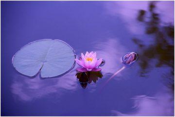 Bodhisattva Kuan Yin Quan Yin Guan Yin Mantra - Namo Guan Shi Yin Pusa